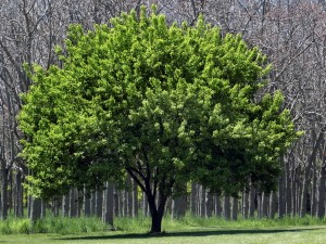 Tree Care and Removal Services in Murfreesboro TN