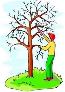 Tree Pruning Services in Murfreesboro TN