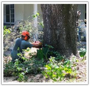 Tree and Stump Removal Services in Murfreesboro TN