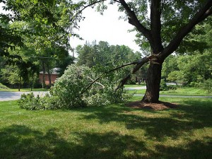 Tree Care and Tree Pruning Services in Murfreesboro TN